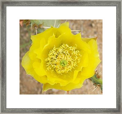 Yellow Cactus Flower Framed Print by Mario Bonaparte