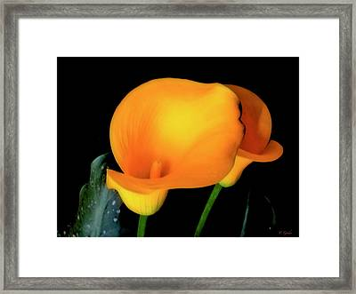 Yellow Calla Lilies - 01 Framed Print by Tony Grider