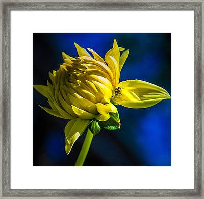 Yellow Camo Framed Print