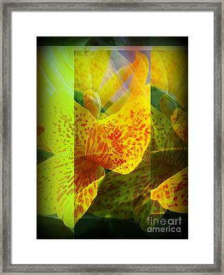 Yellow Canna Lily Surprise Framed Print