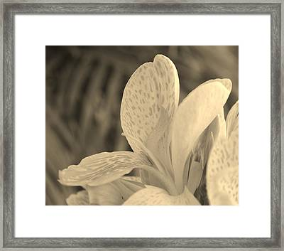 Yellow Canna Framed Print by Melanie Moraga