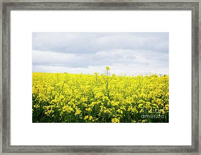 Framed Print featuring the photograph Yellow Canopies by Ivy Ho
