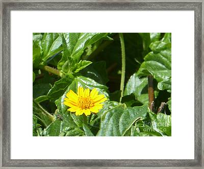 Yellow Caribbean Flower Framed Print