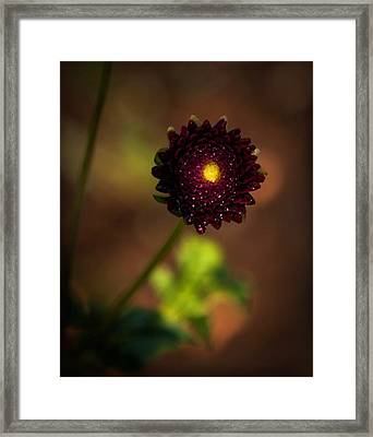 Yellow Center Framed Print by Cherie Duran