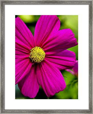 Yellow Center Framed Print by Ches Black