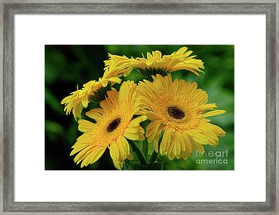 Framed Print featuring the photograph Yellow Chrysanthemums By Kaye Menner by Kaye Menner