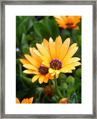 Yellow Colored Petals Framed Print