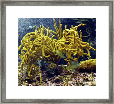 Framed Print featuring the photograph Yellow Coral Dance by Francesca Mackenney