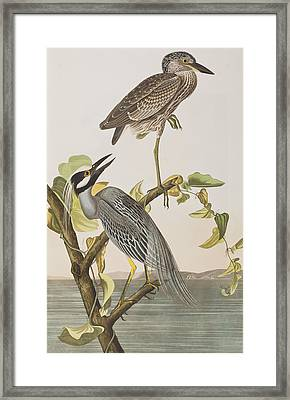 Yellow Crowned Heron Framed Print by John James Audubon