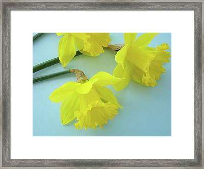 Yellow Daffodils Artwork Spring Flowers Art Prints Nature Floral Art Framed Print by Baslee Troutman