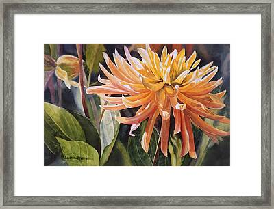 Yellow Dahlia Framed Print by Sharon Freeman