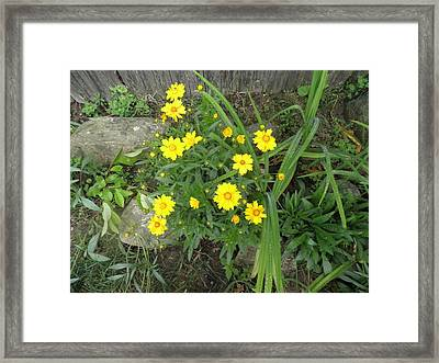 Yellow Daisies Framed Print