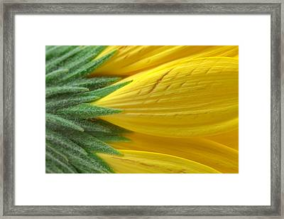 Yellow Daisy Macro Framed Print
