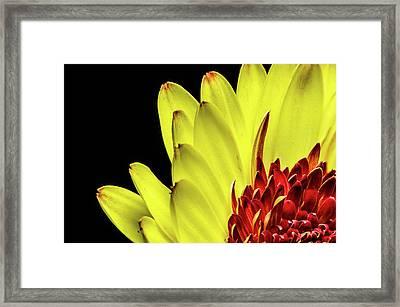 Yellow Daisy Peeking Framed Print