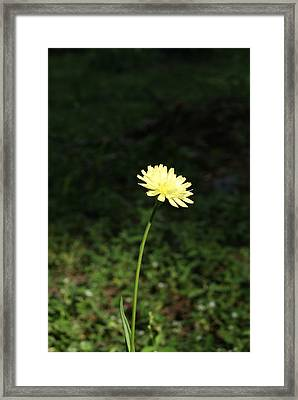 Yellow Dancing Framed Print by Sherry Gombert