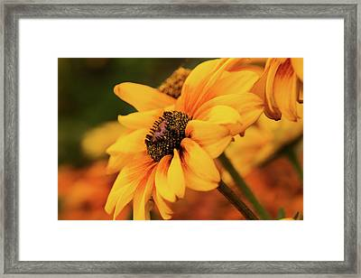 Framed Print featuring the photograph Yellow Dark by Mary Jo Allen