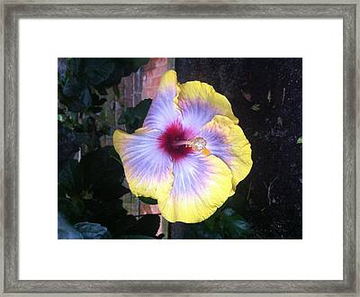 Yellow Delight Framed Print