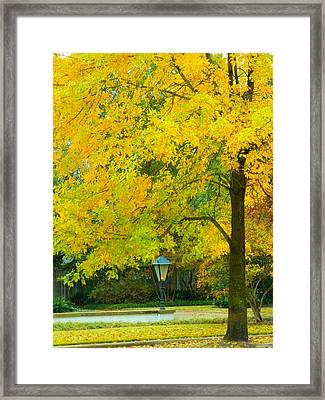 Yellow Drapes Framed Print
