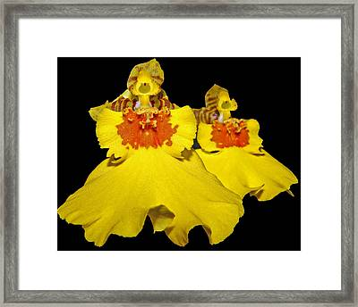 Framed Print featuring the photograph Yellow Dresses by Judy Vincent
