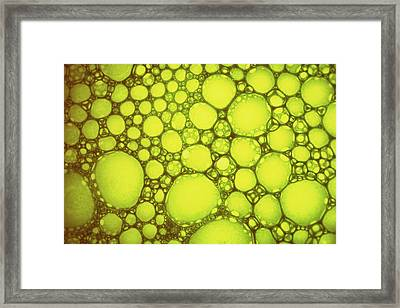Yellow Drops Of Sun Oil On Water Framed Print