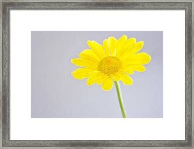 Yellow Drops Framed Print