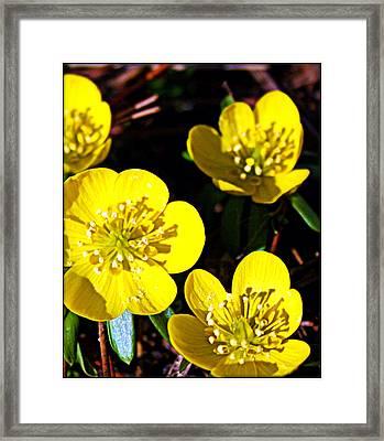 Yellow Framed Print by Elizabeth Babler
