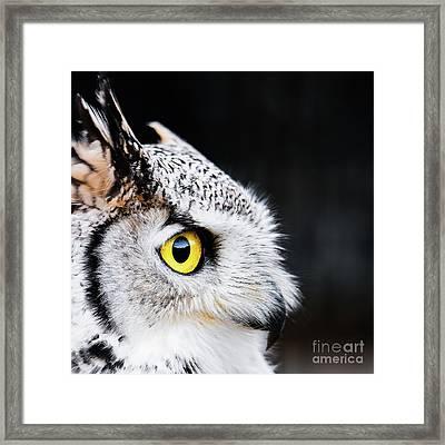 Yellow Eye Framed Print