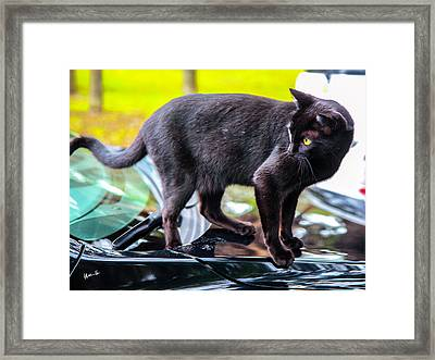 Framed Print featuring the photograph Yellow Eyed Cat by Madeline Ellis
