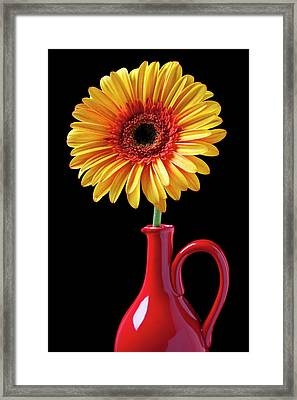 Yellow Fancy Daisy In Red Vase Framed Print by Garry Gay