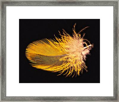 Yellow Feather Macro Framed Print
