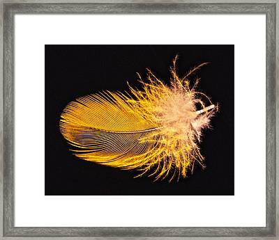 Yellow Feather Macro Framed Print by Bob Slitzan