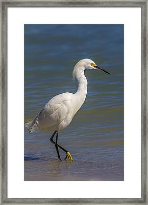 Yellow Feet Framed Print by Marvin Spates