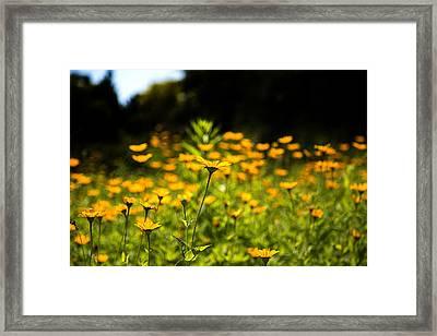 Yellow Field Framed Print