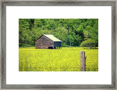 Yellow Field Rustic Shed Framed Print