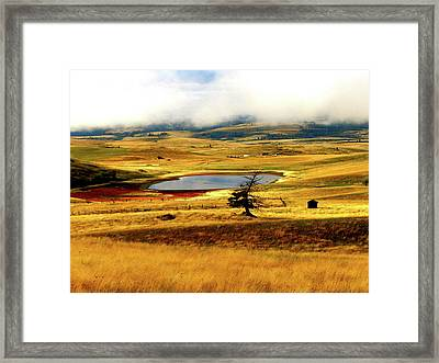 Yellow Fields Framed Print