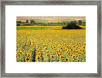 Yellow Fields Framed Print by Kobby Dagan
