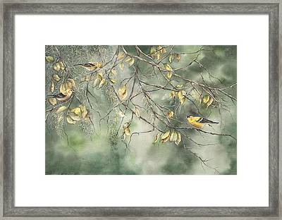 Framed Print featuring the painting Yellow Finch by Mary McCullah