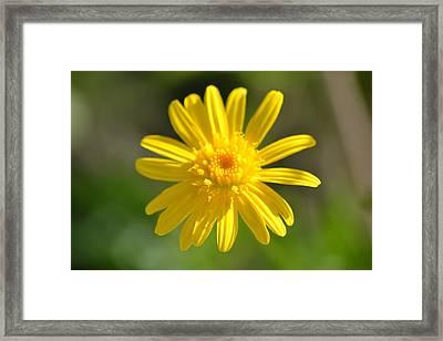 Yellow Fireworks Framed Print