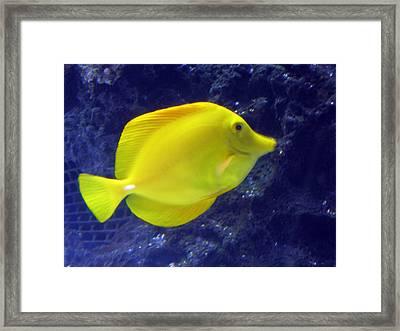 Yellow Fish Framed Print by Suhas Tavkar