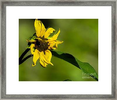 Yellow Flower 1 Framed Print