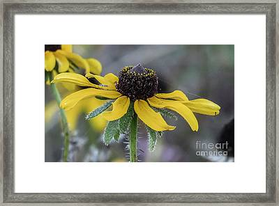 Yellow Flower 6 Framed Print