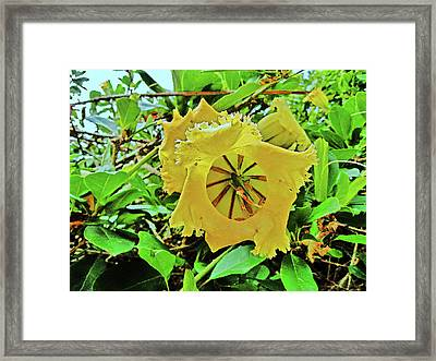 Yellow Flower. Framed Print by Andy Za