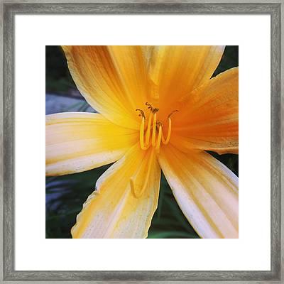 Yellow Flower, Framed Print