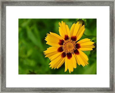 Yellow Flower Framed Print by Edward Myers