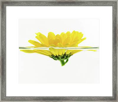Yellow Flower Floating In Water Framed Print