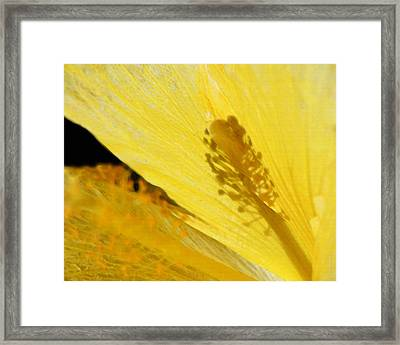 Yellow Flower - Hibiscus Shadow - Sharon Cummings Framed Print by Sharon Cummings