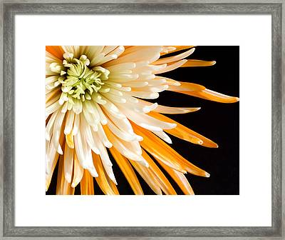 Yellow Flower On Black Framed Print