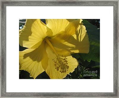Yellow Flower Framed Print by Paula Deutz