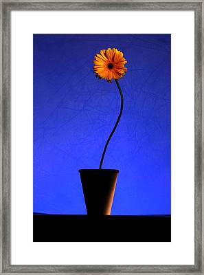 Framed Print featuring the photograph Yellow Flower by Riana Van Staden