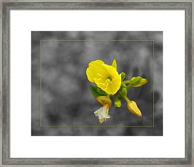 Yellow Flower Framed Print by Robert Clayton
